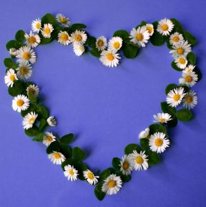 heart_of_daisies